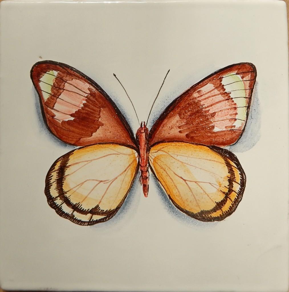 Бабочка_1