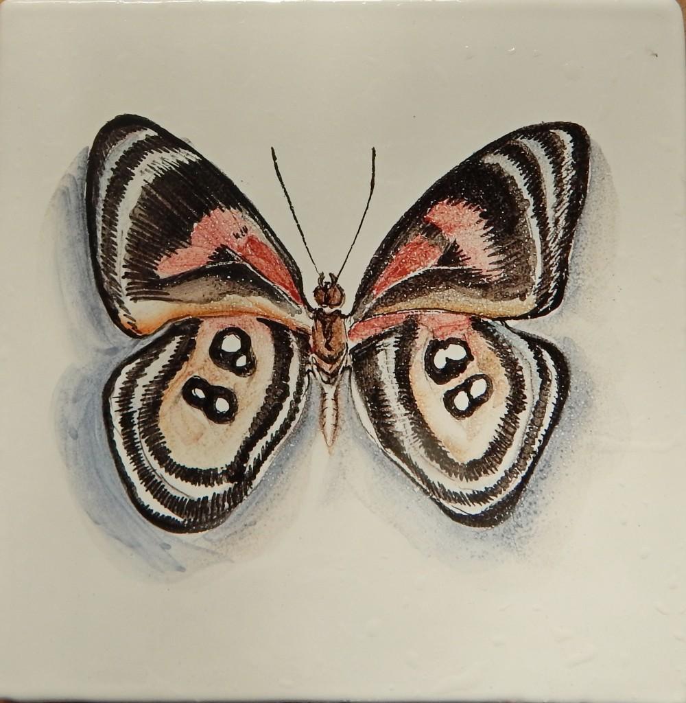 Бабочка_3