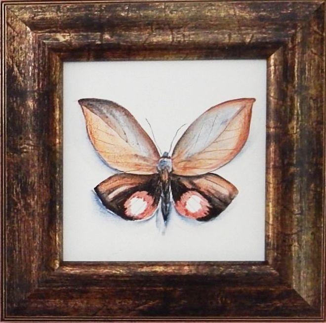 бабочка_в_раме